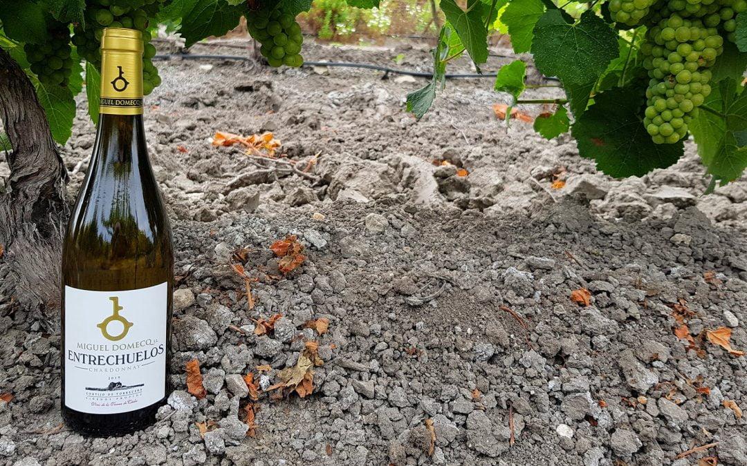 La importancia del suelo en los vinos del Marco de Jerez